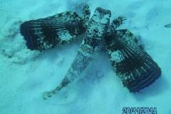 Curacao_2014 (10)