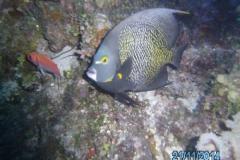 Curacao_2014 (5)