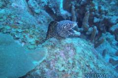 Curacao_2014 (8)