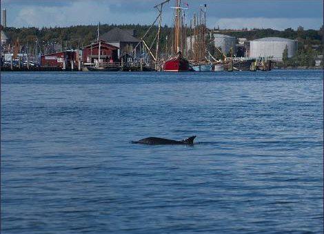 Abtauchen 2009 oder Delfine nicht gesichtet